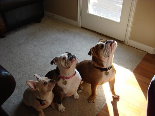 The Brandemihl Bulldogs